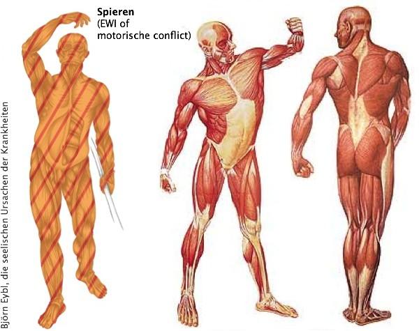 brandende spieren